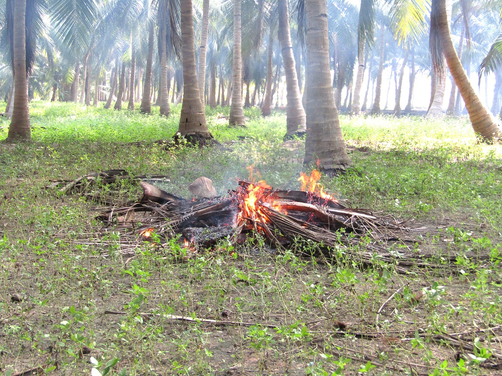 5 THINGS THAT CAN BE DANGEROUS TO YOUR COCONUT FARM