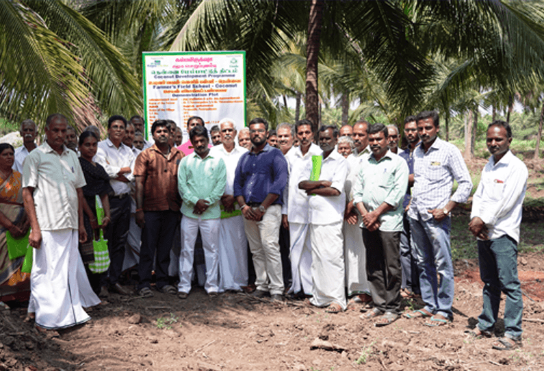 Marico's Parachute Kalpavriksha helps coconut farmers to increase their yield
