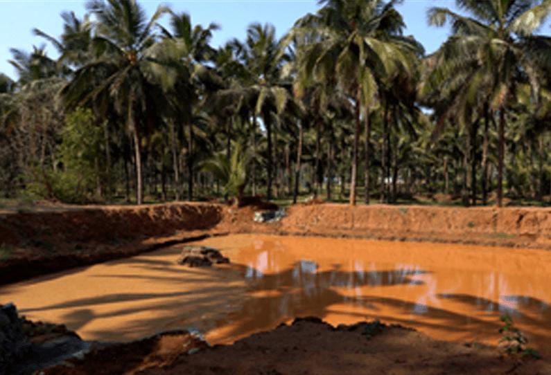 Tamil Nadu: Farmers reap benefits of farm ponds during low rainfall