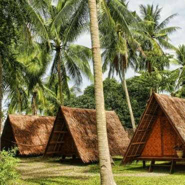 7 GOOD REASONS WHY YOU SHOULD GROW A COCONUT TREE
